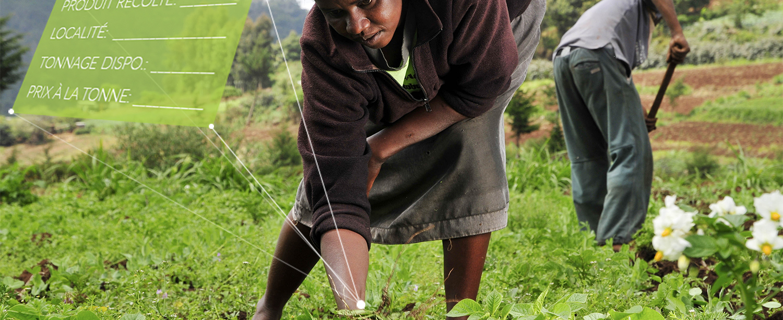 E-agribusiness : la solution tout en un de l'agriculteur togolais