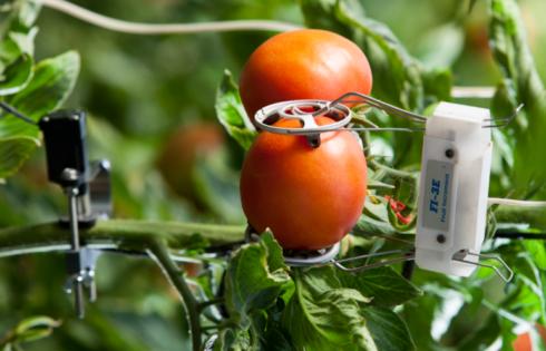Des pays africains à la pointe de l'agro-technologie en Afrique